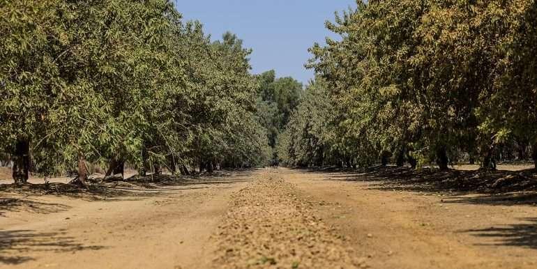 19 acres tipton almonds-9