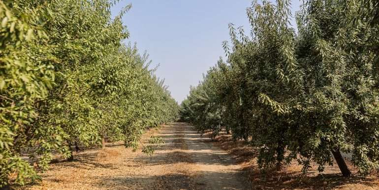 69 acres vines and almonds-13