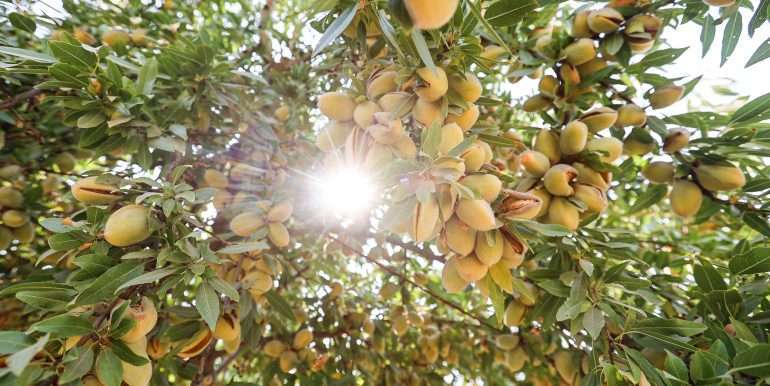 69 acres vines and almonds-15