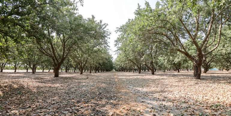 69 acres vines and almonds-16