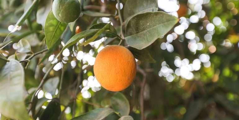 Porterville-165-acres-citrus and home-23