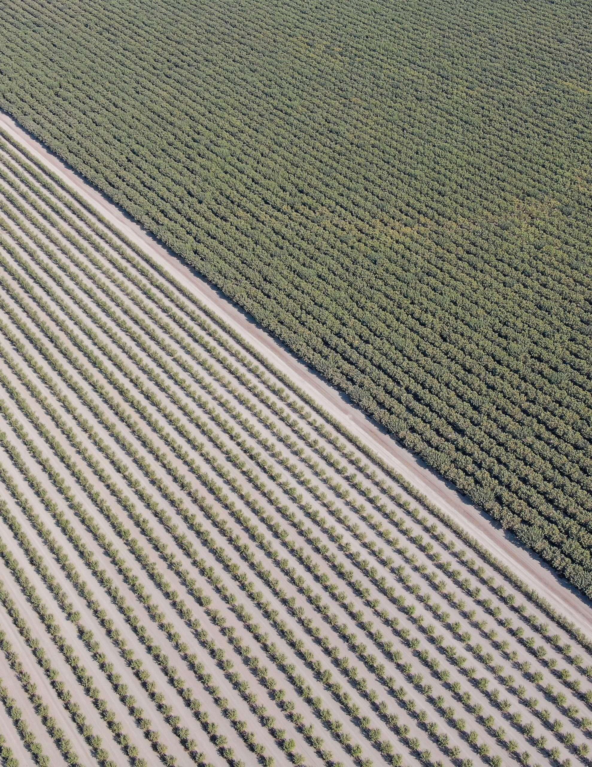 +/-852.15 Acres – Almonds, Pistachios, Alfalfa, and Open Land – Corcoran