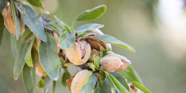 rietkerk pistachios and almonds-11