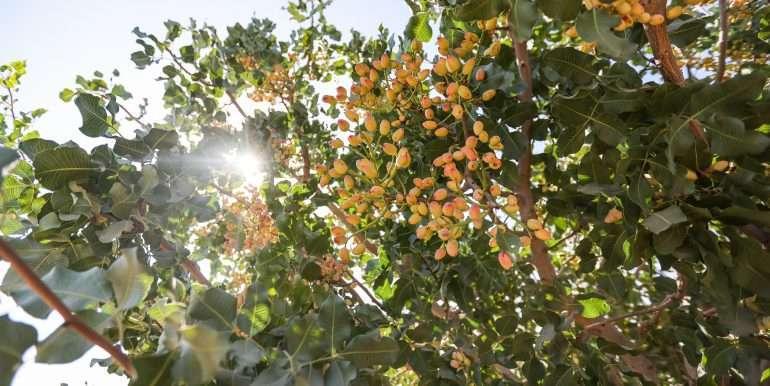 rietkerk pistachios and almonds-25