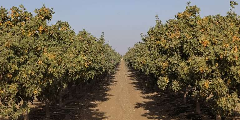 rietkerk pistachios and almonds-35