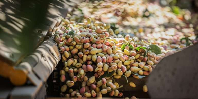 rietkerk pistachios and almonds-46
