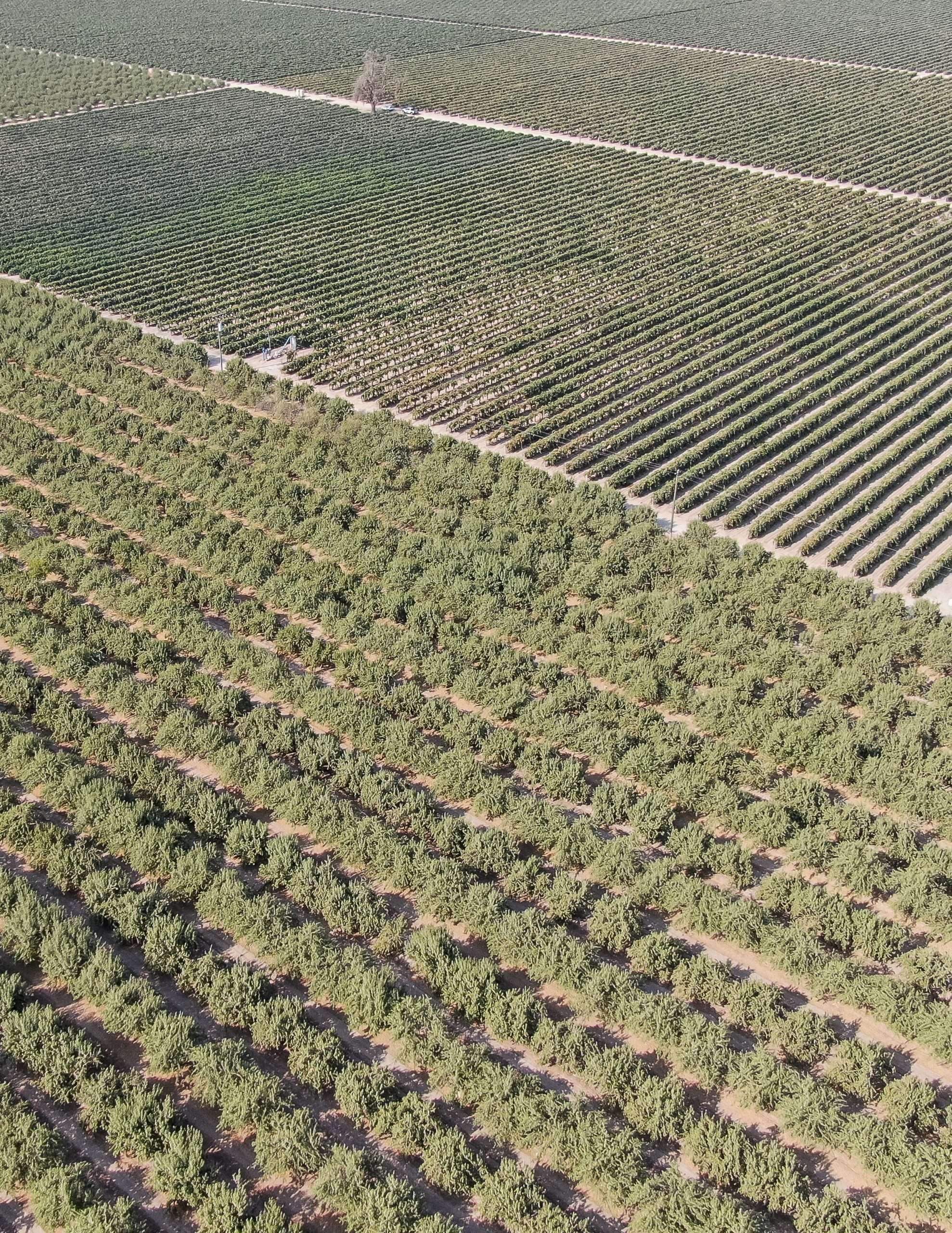 +/-69.22 Acres – Almonds & Grapes  – Fresno, CA