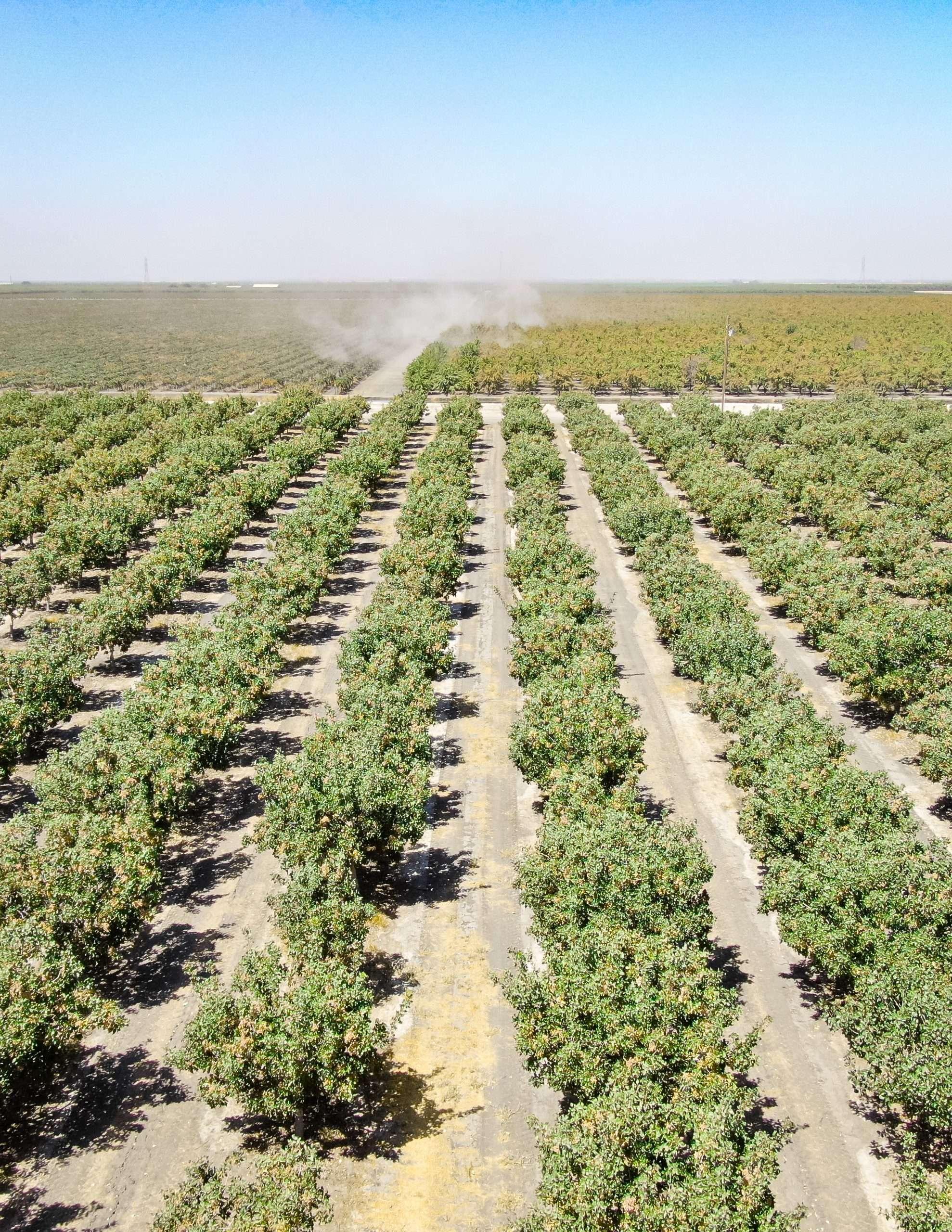 +/-86.61 Acres – Pistachios – San Joaquin, CA