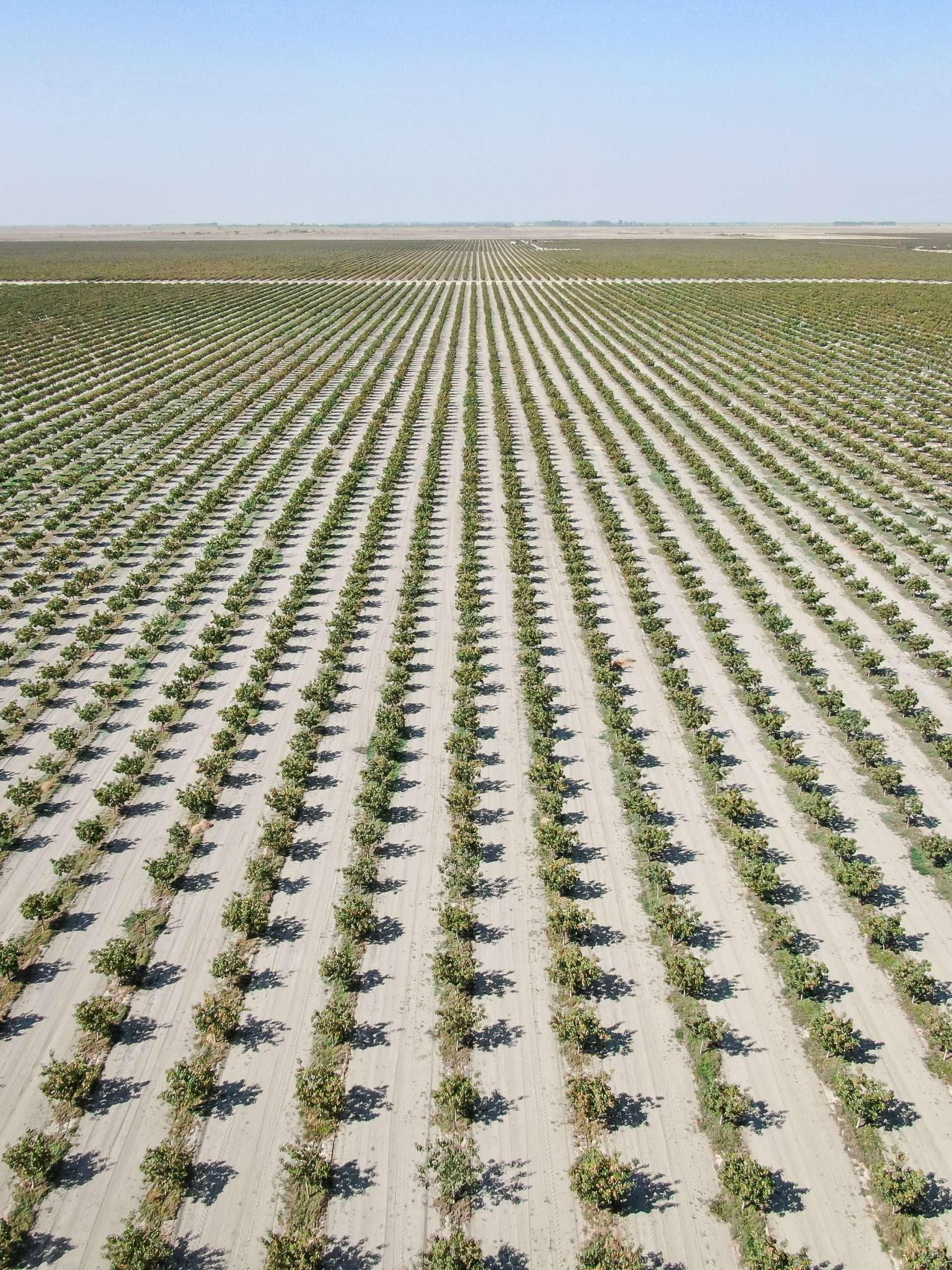 +/-1,117.88 Acres – Pistachios – Alpaugh, CA