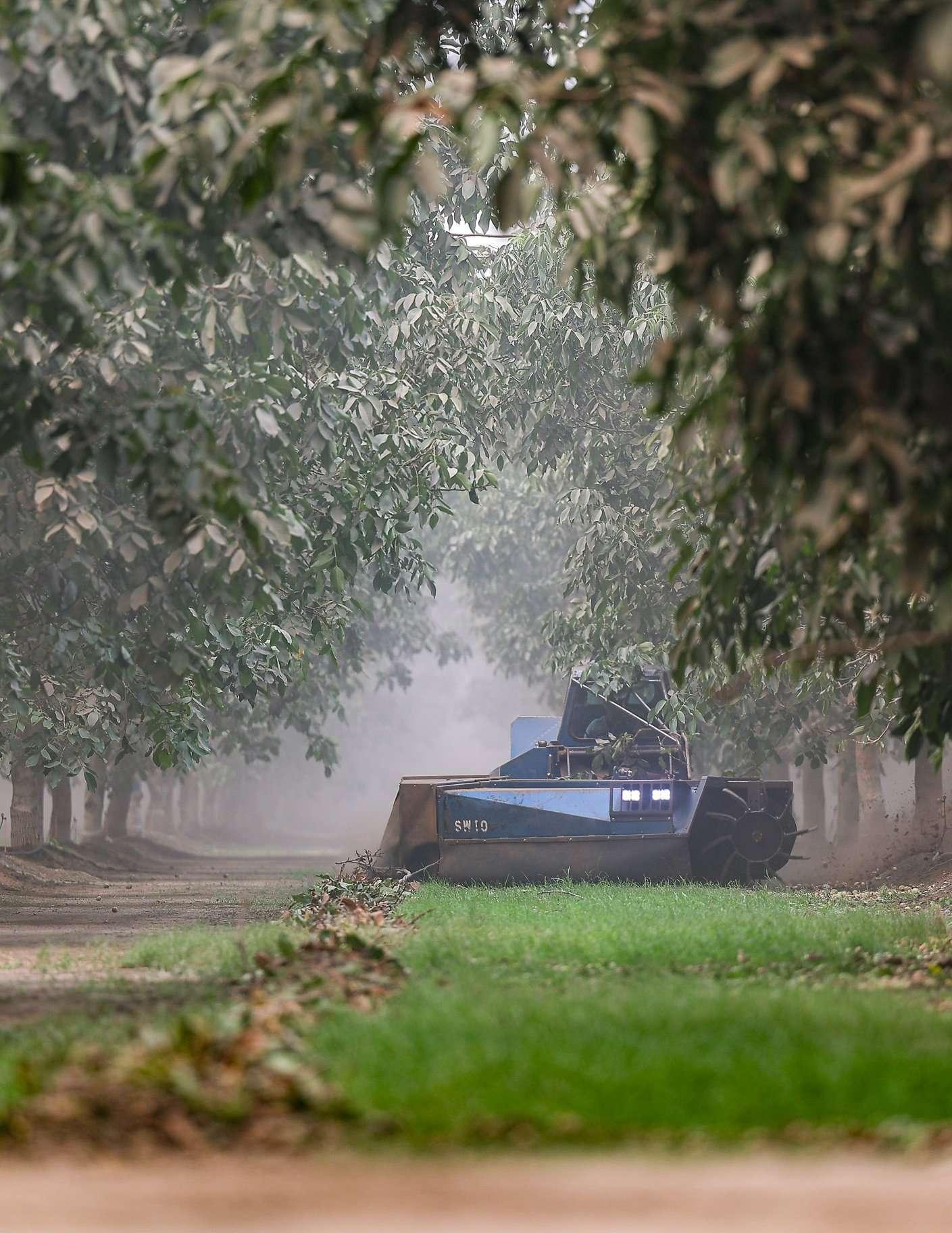 +/-160 Acres – Walnuts – Porterville, CA