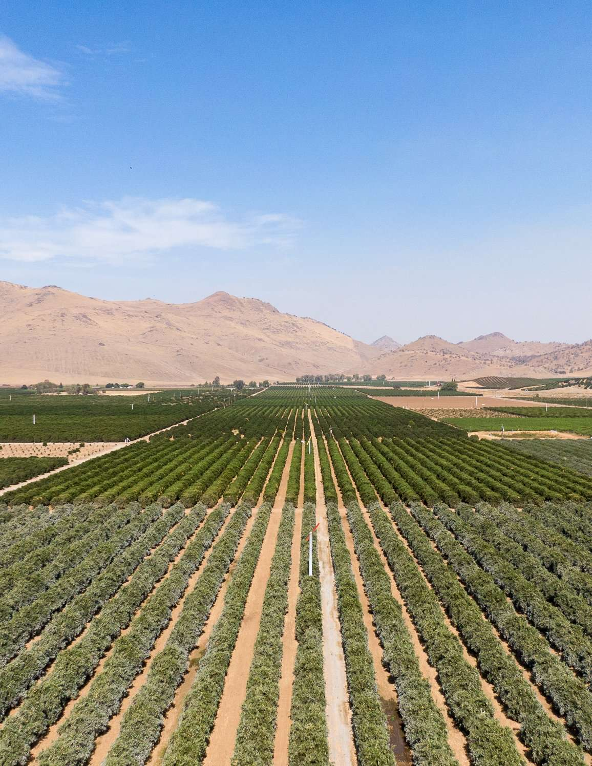 +/-80 Acres – Organic Citrus & Grapes – Visalia, CA
