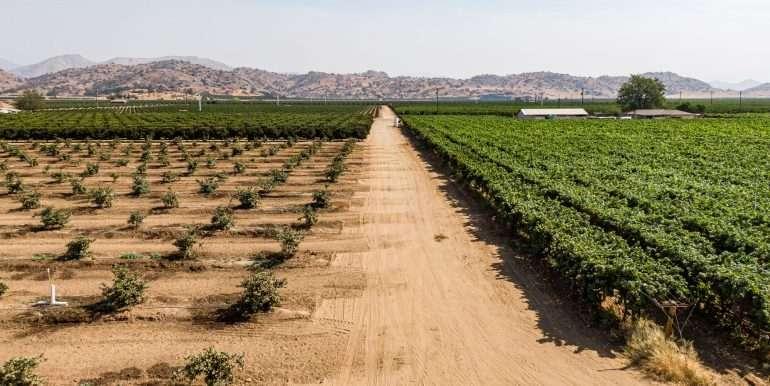 80 acres organic-1