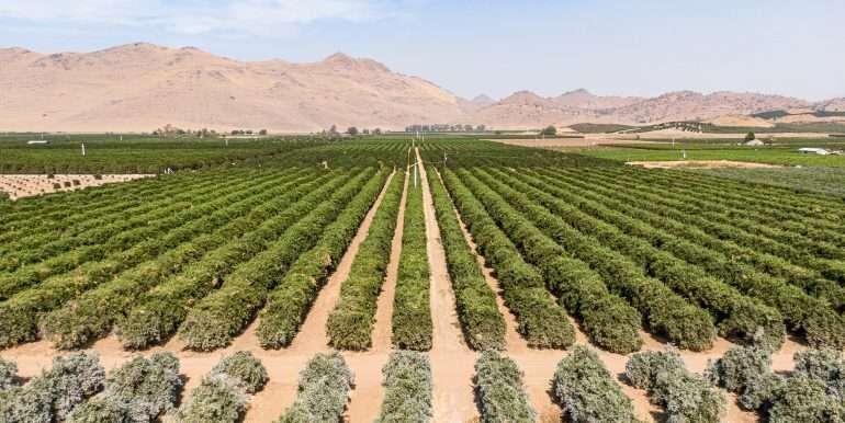 80 acres organic-10