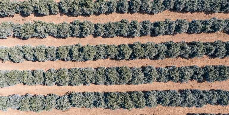 80 acres organic-11