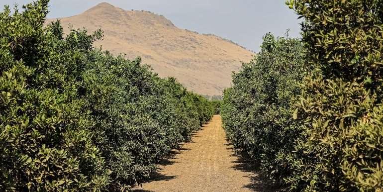80 acres organic-15