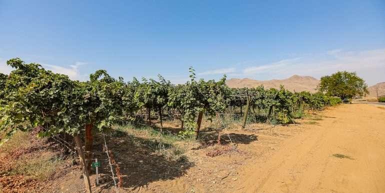80 acres organic-24