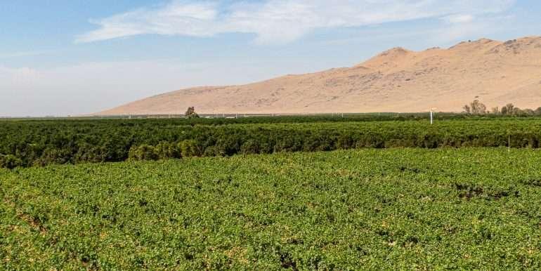 80 acres organic-5