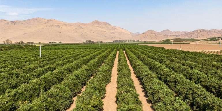 80 acres organic-6