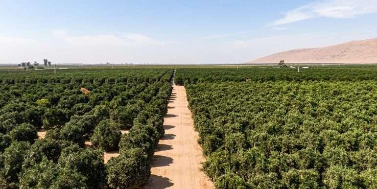 80 acres organic-7