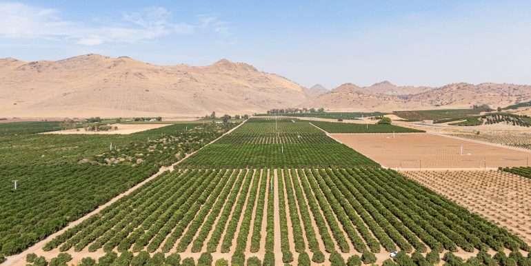 80 acres organic-8